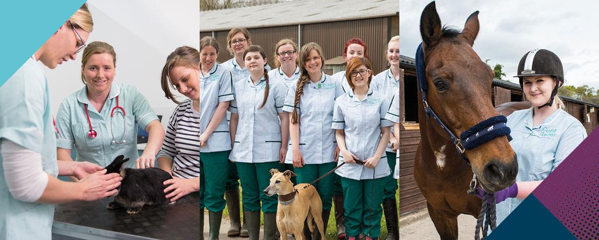 Foundation Degree Veterinary Nursing - Coleg Gwent