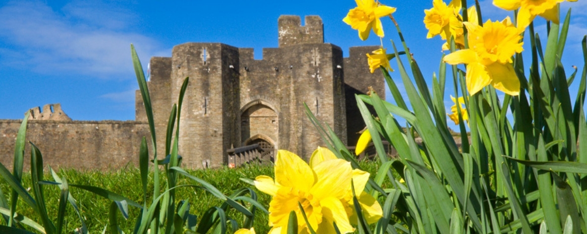 Daffodils and Welsh castle