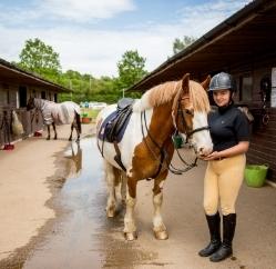 RDA Coleg Gwent equestrian facilities and horses